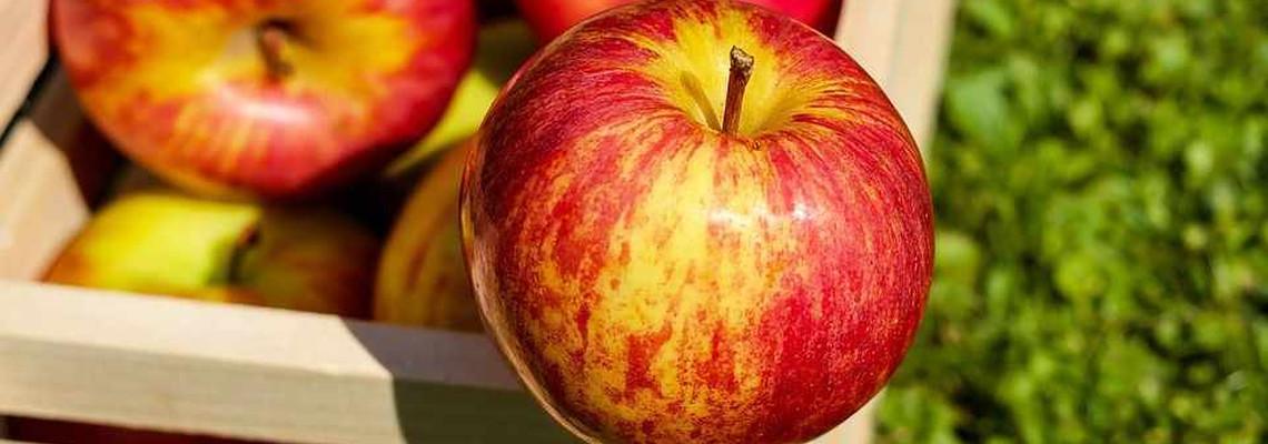 17th Apple Festival
