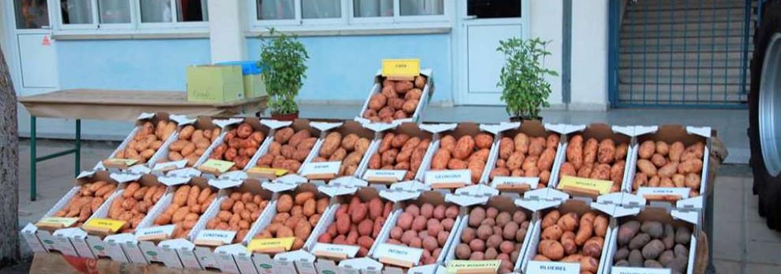 6th Pancyprian Festival of Potato in Avgorou